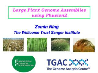 Large Plant Genome Assemblies using Phusion2