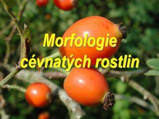 Morfologie cévnatých rostlin