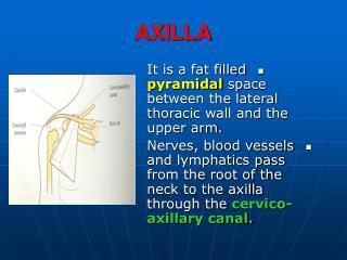 AXILLA