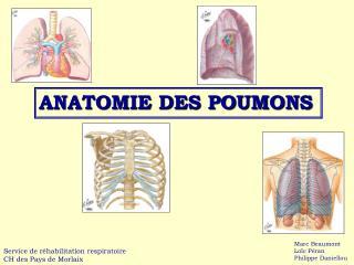 ANATOMIE DES POUMONS