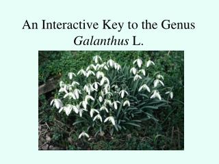 An Interactive Key to the Genus Galanthus  L.