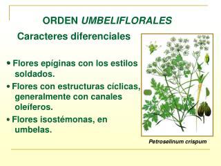 ORDEN  UMBELIFLORALES