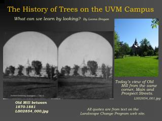 The History of Trees on the UVM Campus