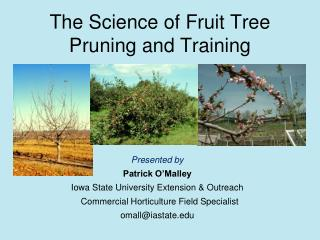 The Science of Fruit Tree Pruning and Training