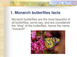 1.  Monarch butterflies facts
