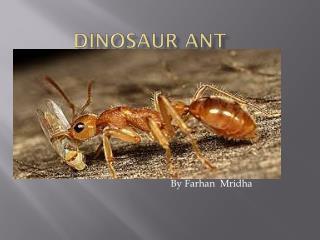 Dinosaur ant