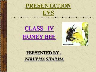 PRESENTATION EVS
