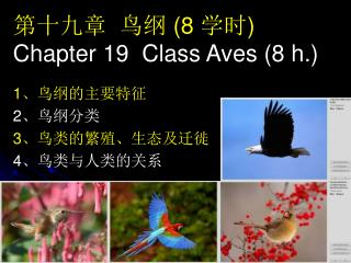 第十九章  鸟纲  (8  学时 ) Chapter 19  Class Aves (8 h.)