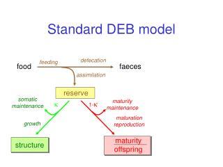 Standard DEB model