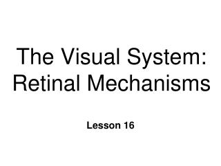 The Visual System: Retinal Mechanisms