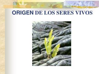 ORIGEN  DE LOS SERES VIVOS