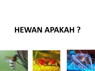 HEWAN APAKAH ?