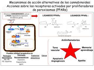 Diversos  CANNABINOIDES  activan  a  PPARs  regulando la expresión  de distintos genes