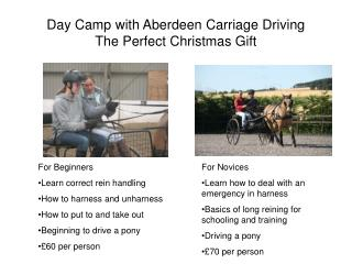 Day Camp with Aberdeen Carriage Driving The Perfect Christmas Gift