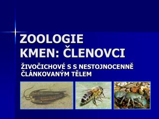 ZOOLOGIE KMEN: CLENOVCI