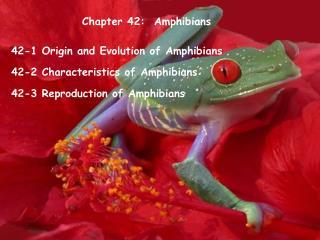 Chapter 42:  Amphibians