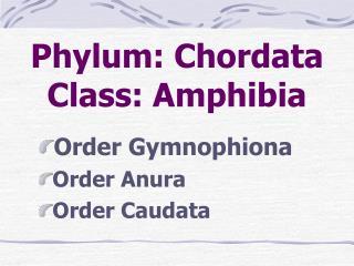 Phylum: Chordata Class: Amphibia