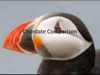 Chordate Comparison