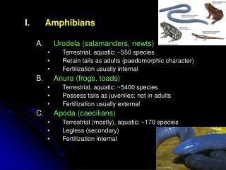 Amphibians Urodela (salamanders, newts) Terrestrial, aquatic: ~550 species
