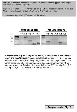 Supplemental Fig. 2