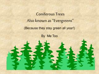 """Coniferous Trees Also known as """"Evergreens"""""""