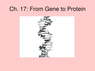 Ch. 17: From Gene to Protein
