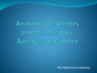 Anatom�a  de dientes antero-inferiores. Apertura de C�mara