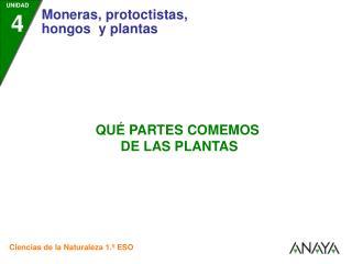 •  Las plantas son un alimento básico para las personas .