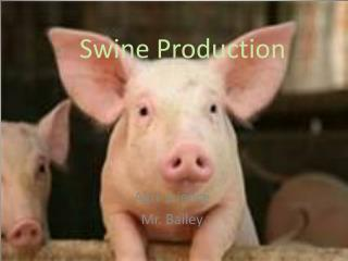 Swine Production