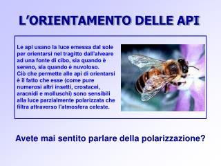 L'ORIENTAMENTO DELLE API
