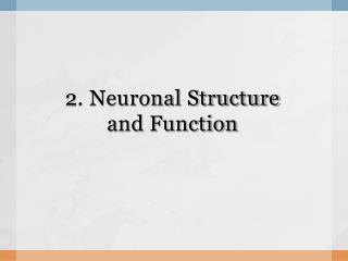 2. Neuronal Structure  and Function