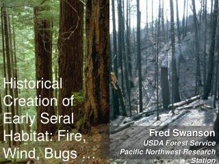 Historical Creation of Early Seral Habitat: Fire, Wind, Bugs