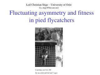 Fluctuating asymmetry and fitness in pied flycatchers