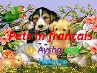 Pets in français