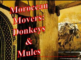 Moroccan Movers: Donkeys & Mules