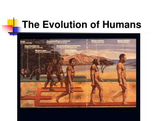The Evolution of Humans