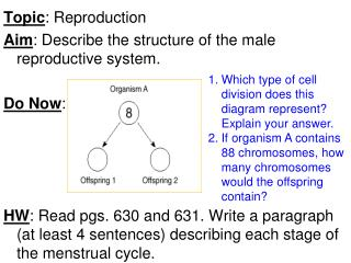 Topic : Reproduction Aim : Describe the structure of the male reproductive system. Do Now :