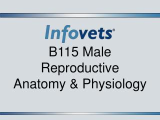 B115 Male Reproductive  Anatomy & Physiology