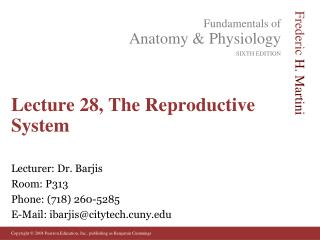 Lecture 28, The Reproductive System