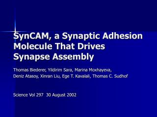 SynCAM, a Synaptic Adhesion Molecule That Drives Synapse Assembly