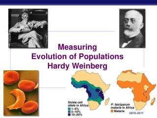 Measuring Evolution of Populations Hardy Weinberg