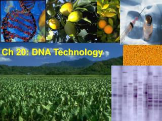 Ch 20: DNA Technology