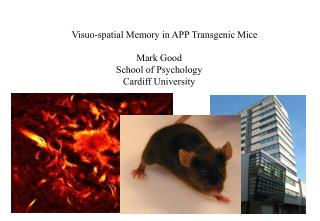 Visuo-spatial Memory in APP Transgenic Mice