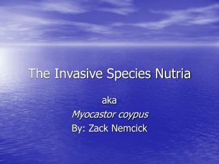 The Invasive Species Nutria
