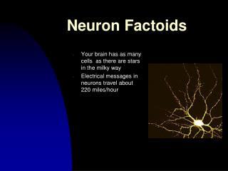 Neuron Factoids