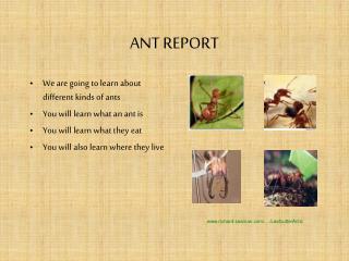 ANT REPORT