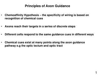 Principles of Axon Guidance