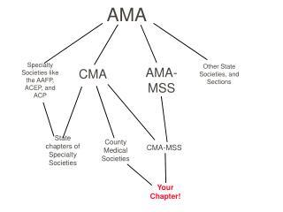 CMA-MSS