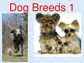 Dog Breeds 1