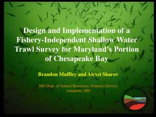 Brandon Muffley and Alexei Sharov MD Dept. of Natural Resources, Fisheries Service Annapolis, MD